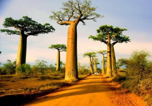 baobaas